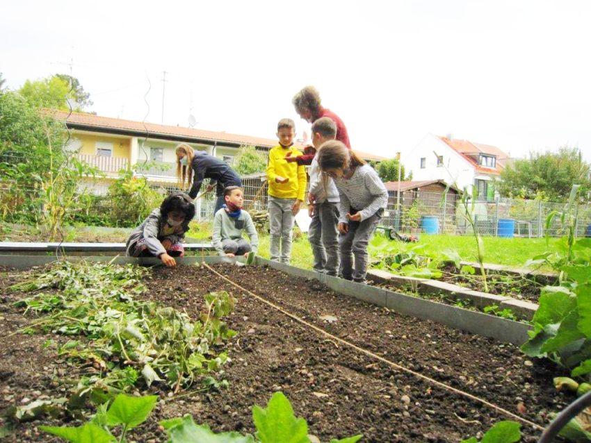 Schulgarten Nachsaat